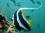 Chaloklum Diving Koh Phangan 04