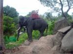 ElephantTrekkingKohPhangan-04