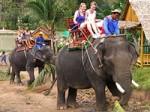 Koh Phangan Elephant Trekking 01