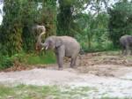 Koh Phangan Elephant Trekking 03