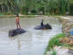 Koh Phangan Elephant Trekking 04