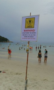 Koh Phangan plans to arrange lifeguards after jellyfish death