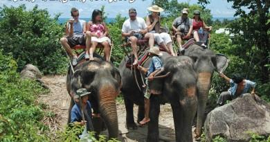 Koh-Phangan-Elephant-Trekking-4417