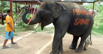 Koh-Phangan-Elephant-Trekking-4567