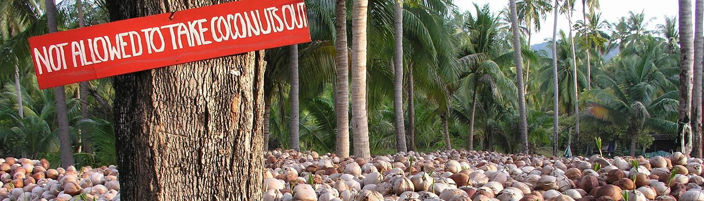 Koh Phangan Island News