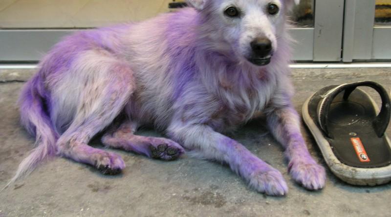 Pink-Dog-1010015