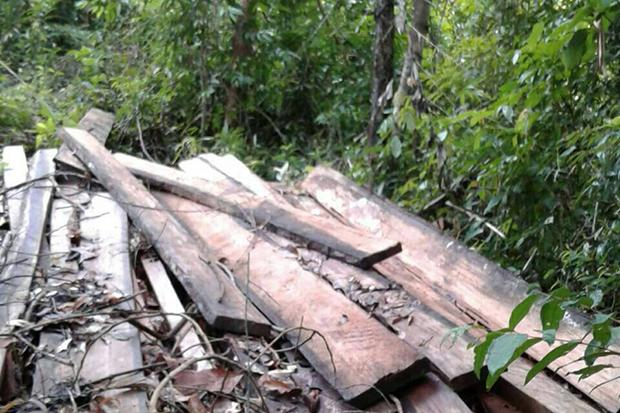 Wooden planks found on the mountain in Koh Phangan National Park. (Photo Credit @ Bangkokpost Supapong Chaolan)