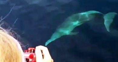 Rare pink dolphin at dive site Sail Rock Koh Phangan