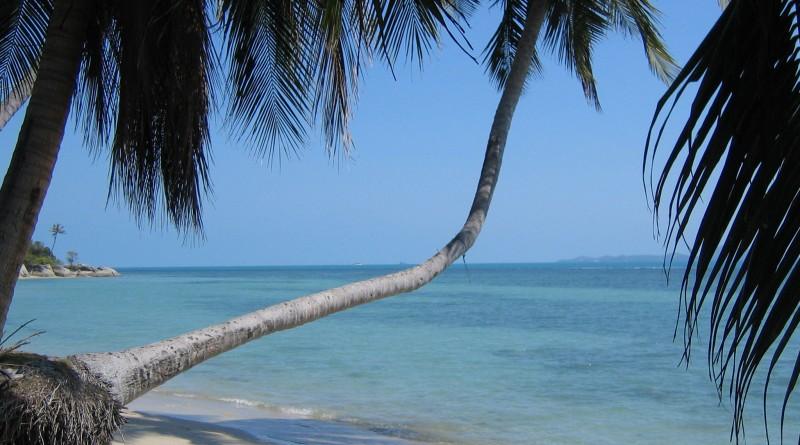 Palm-Tree-0184
