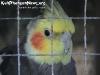 AnimalsPhangan-06