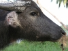 AnimalsPhangan-08
