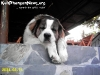 AnimalsPhangan-45
