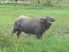 AnimalsPhangan-59