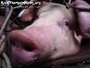 AnimalsPhangan-82