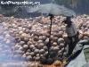 CoconutsPhanganIsland-02