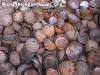 CoconutsPhanganIsland-03