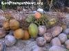 CoconutsPhanganIsland-04
