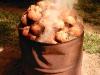 CoconutsPhanganIsland-07