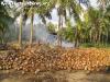 CoconutsPhanganIsland-08
