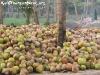 CoconutsPhanganIsland-09