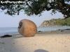 CoconutsPhanganIsland-11