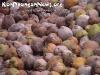 CoconutsPhanganIsland-12