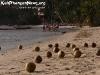 CoconutsPhanganIsland-15