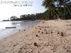 CoconutsPhanganIsland-16