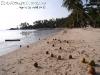 CoconutsPhanganIsland-17