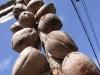 CoconutsPhanganIsland-20