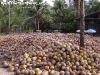 CoconutsPhanganIsland-22