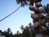 CoconutsPhanganIsland-23