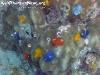 KohPhanganDiving-012