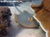 KohPhanganDiving-018