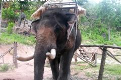 Elephant Trekking Koh Phangan