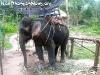 ElephantTrekkingPhangan-03