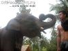 ElephantTrekkingPhangan-04