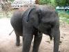 ElephantTrekkingPhangan-05