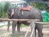 ElephantTrekkingPhangan-08