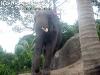 ElephantTrekkingPhangan-09