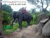 ElephantTrekkingPhangan-10