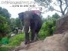 ElephantTrekkingPhangan-11
