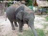 ElephantTrekkingPhangan-12