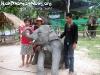ElephantTrekkingPhangan-14