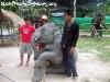 ElephantTrekkingPhangan-15
