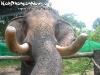 ElephantTrekkingPhangan-16