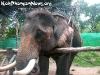 ElephantTrekkingPhangan-17