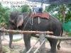 ElephantTrekkingPhangan-18
