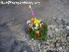 PhanganFullMoonPartyNov-2005-66