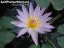 Flowers Koh Phangan